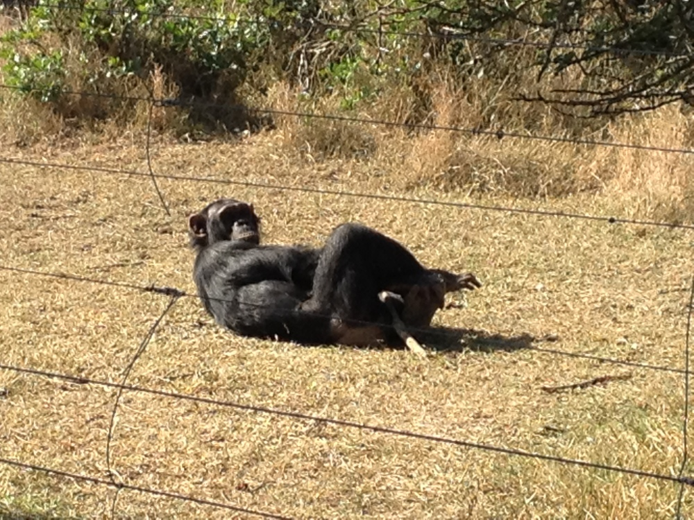 Ol Pejeta Chimp Conservancy